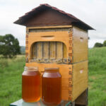 Automatic Honey Collecting Beehive 1