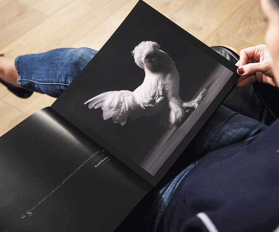 Beautiful Chickens Coffee Table Book 1
