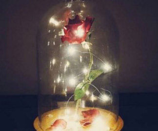 Beauty And The Beast Enchanted Rose 1