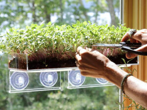 Grow And Serve Microgreen Kit