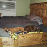 King Bed With Doggy Insert 1