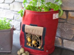Potato Planter With Picking Flap