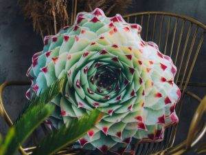 Realistic Succulent Pillows 1