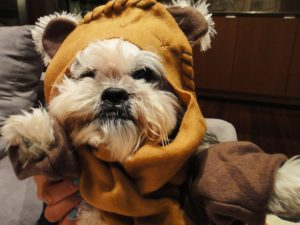 Star Wars Ewok Dog Costume